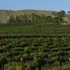 Capay Valley Vineyards - DSC4460