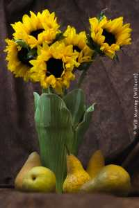 Still_Life_Sunflowers_and_Pears_-_DSC4273.jpg