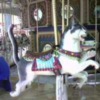 200602010021_00003 Roseville Galleria Carousel Cat