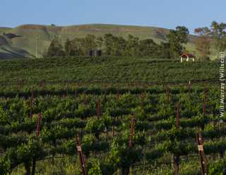 Capay_Valley_Vineyards_-_DSC4460.jpg