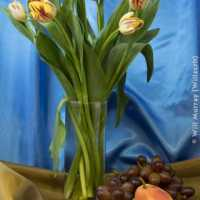 Still Life Tulips Grapes and Pear - DSC4293